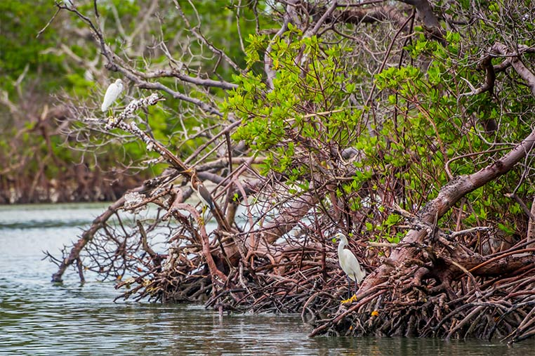 See Southwest Florida Wildlife by Paddleboard   Florida Adventures and Rentals