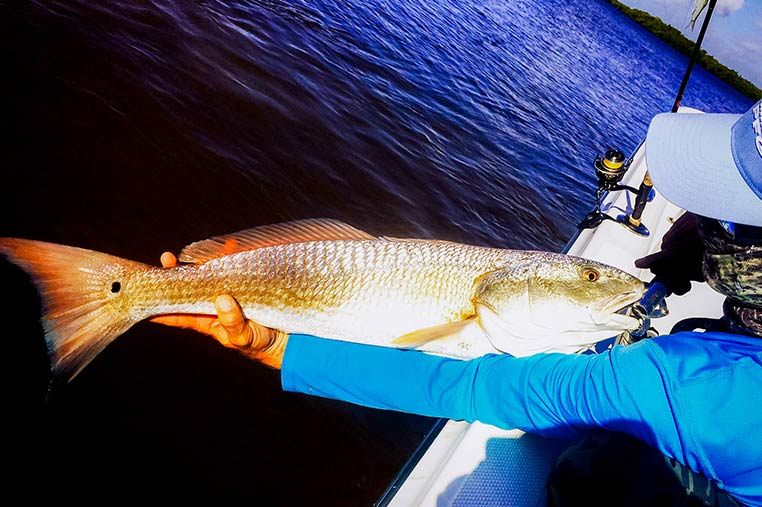 Backwater Fishing Charters Marco Island | Florida Adventures and Rentals