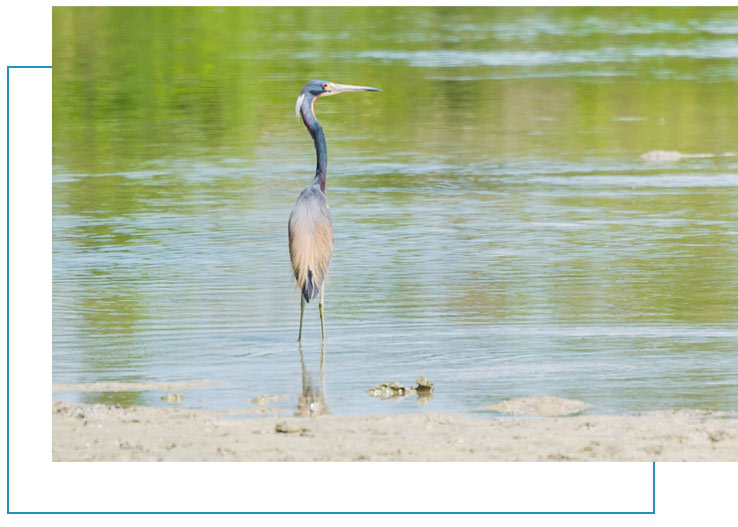 Birding Tours Marco Island | Florida Adventures and Rentals