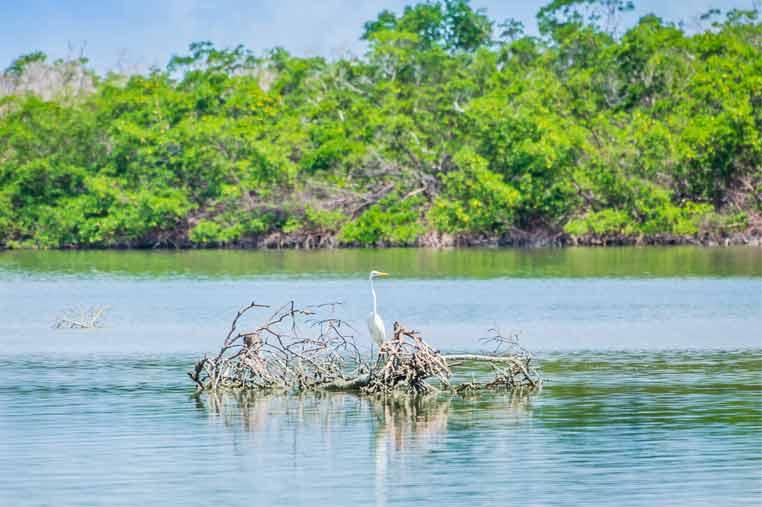 birds resting on mangroves during a kayak tour   Florida Adventures and Rentals