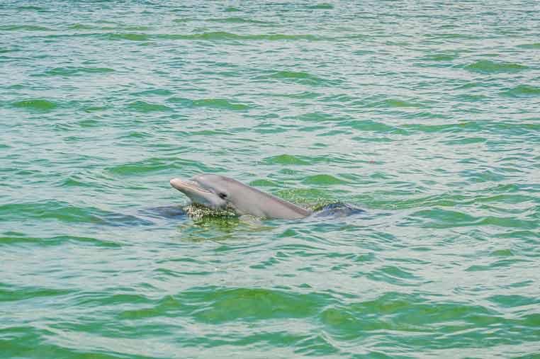 dolphin sighting on kayak tour | Florida Adventures and Rentals