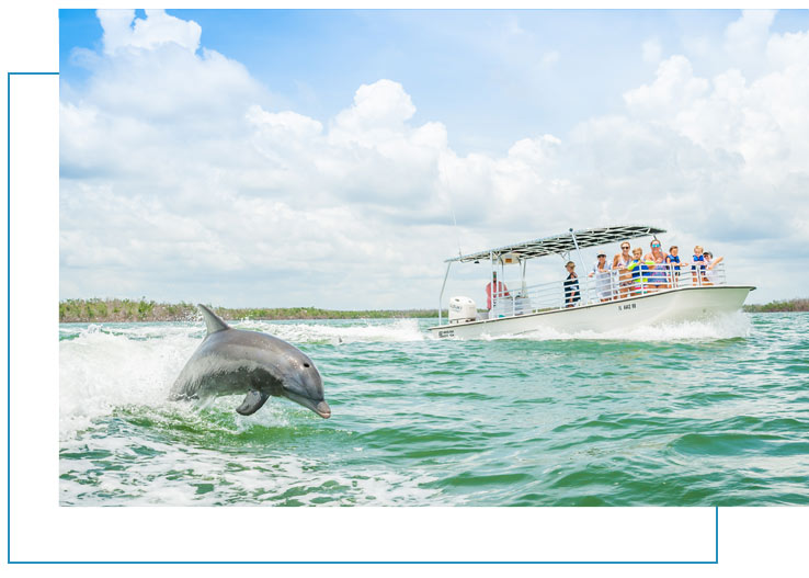 Marco Island Dolphin Tours | Florida Adventures and Rentals