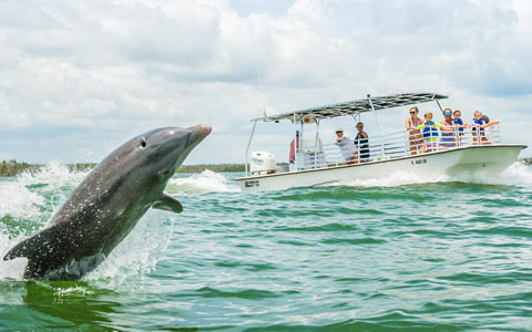 Dolphin Tours near Marco Island, Florida | Florida Adventures and Rentals