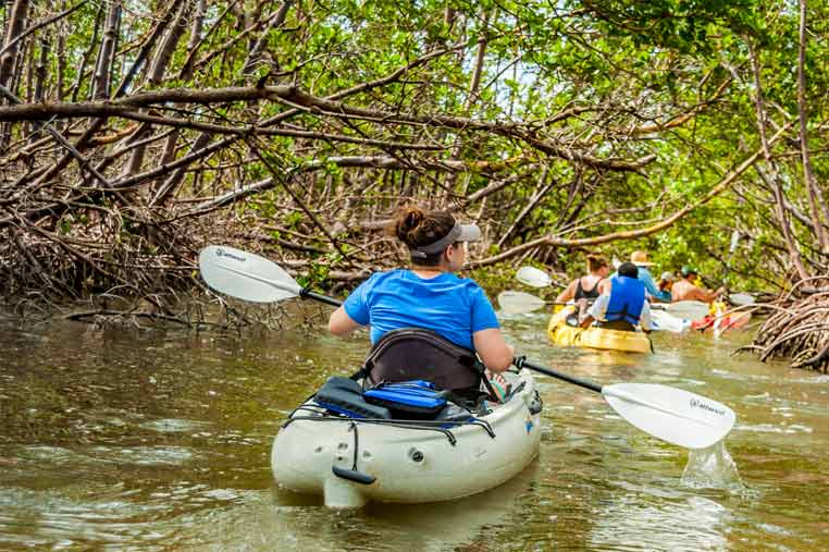 Exploring mangroves tunnels on a guided kayak tour| Florida Adventures and Rentals