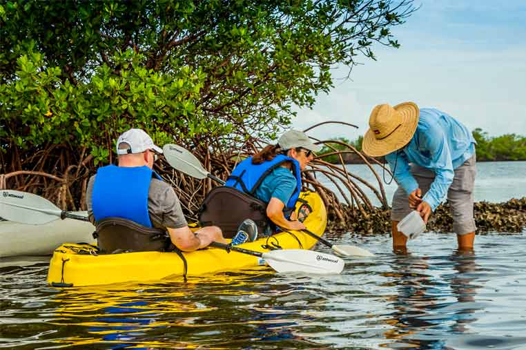 Kayak guide showing guests a horse conch  Florida Adventures and Rentals