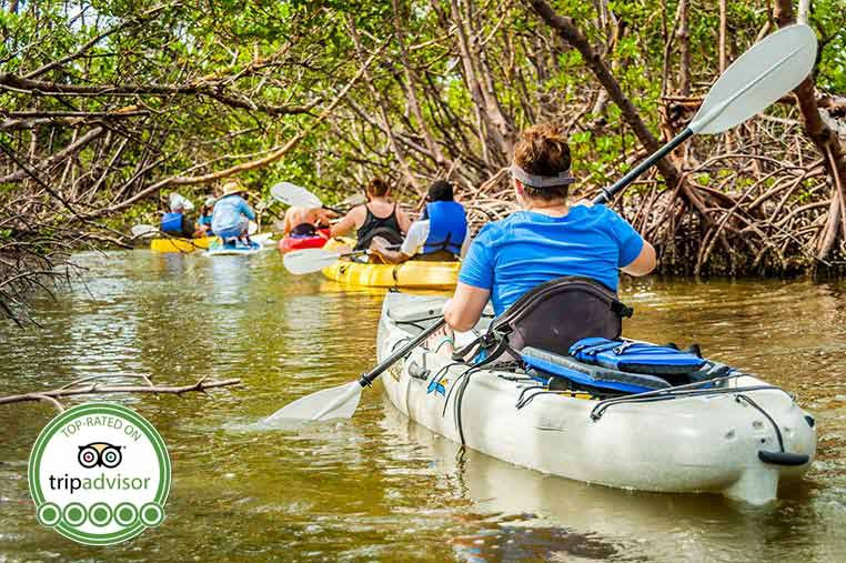 Guided Kayak Tours through the Mangroves | Florida Adventures and Rentals