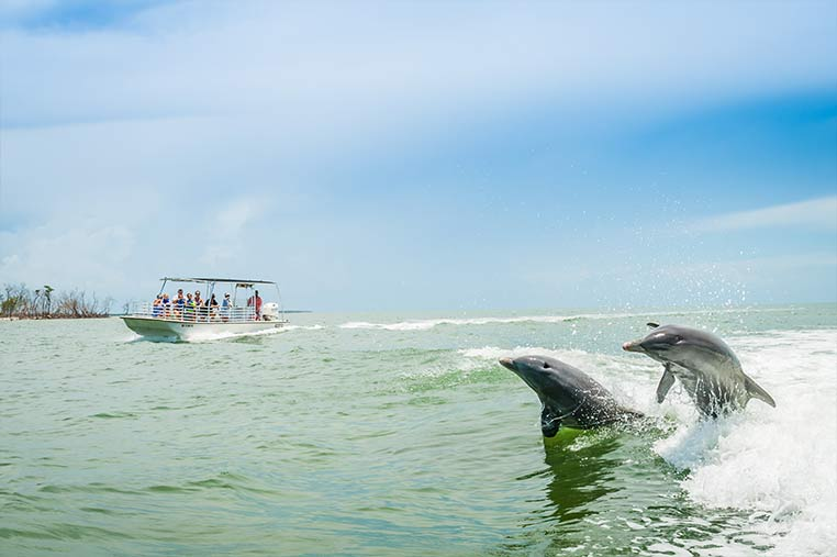 Dolphins jumping out of the water on our Marco Island Dolphin Tours | Florida Adventures and Rentals