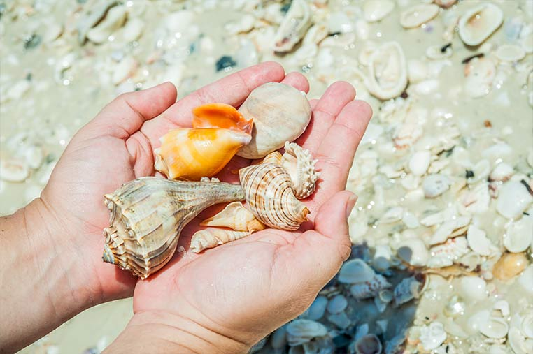 Marco Island Shelling Tours near Cape Romano | Florida Adventures and Rentals