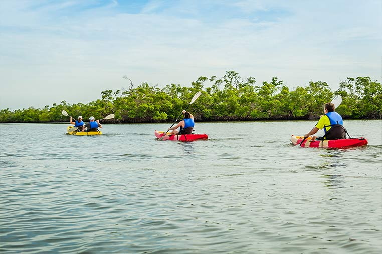 Mangroves visible during Marco Island Kayak Tours | Florida Adventures and Rentals