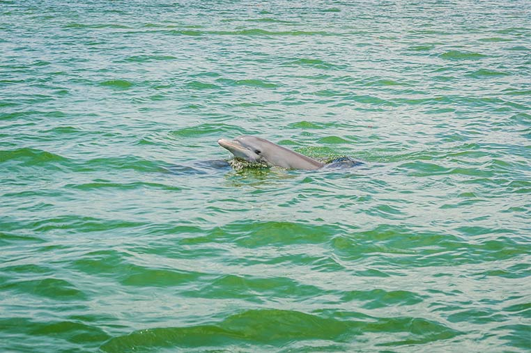 Friendly and inquisitive dolphins | Florida Adventures and Rentals
