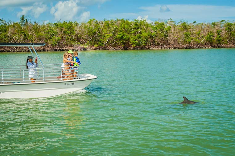 Dolphin Sightings Guaranteed on our Marco Island Dolphin Tours | Florida Adventures and Rentals