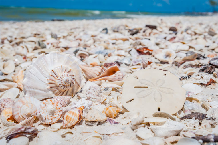 beaches loaded with shells on Marco Island | Florida Adventures and Rentals