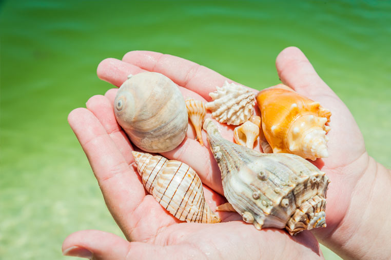 treasures found in the 10,000 islands | Florida Adventures and Rentals