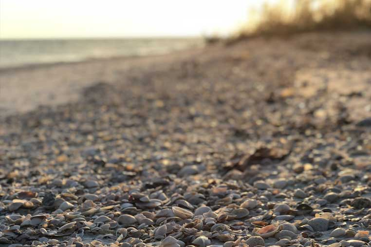 Sunset shelling tour on amerce island